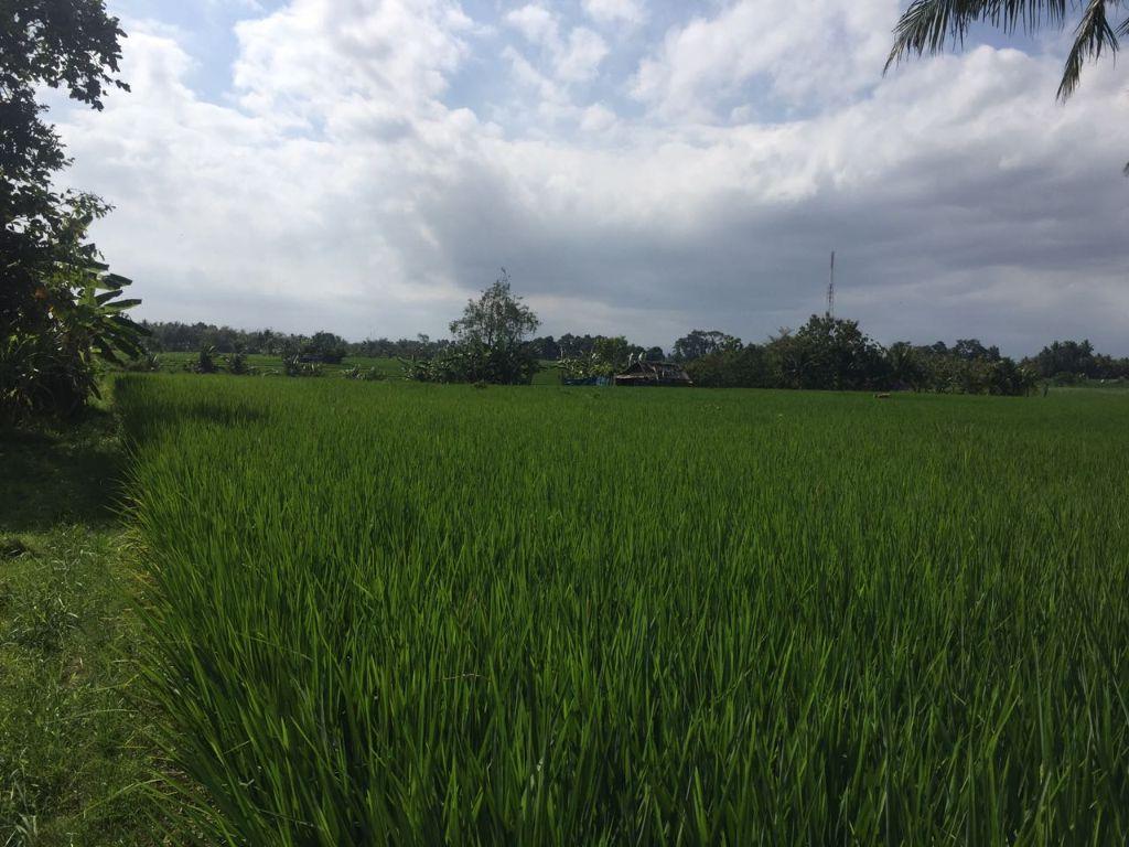 Huge Parcel Of Land For Sale Near Tanah Lot