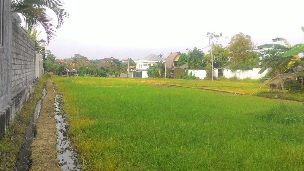 LAND SURROUNDED BY RICE PADDIES IN UMALAS