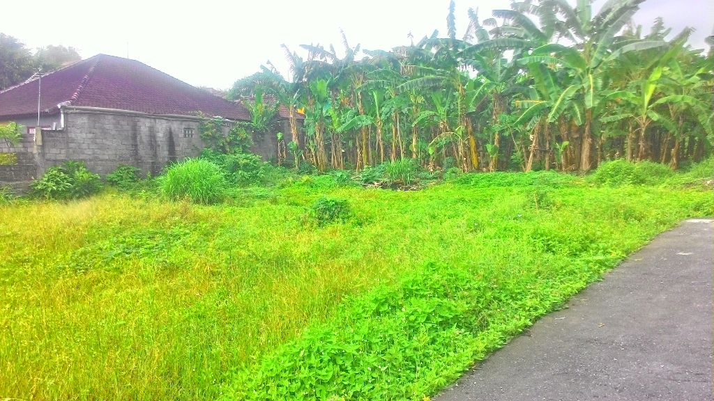 Rare Land For Sale In Prime Area Of Umalas